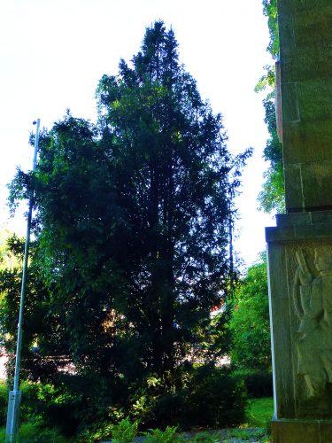 cis przy pomniku - 49, 64 i 53