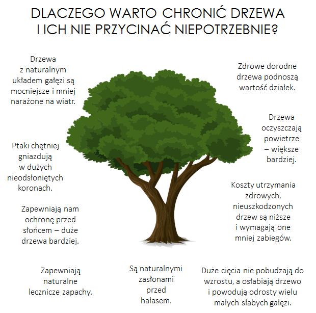 dlaczego warto chronić drzewa