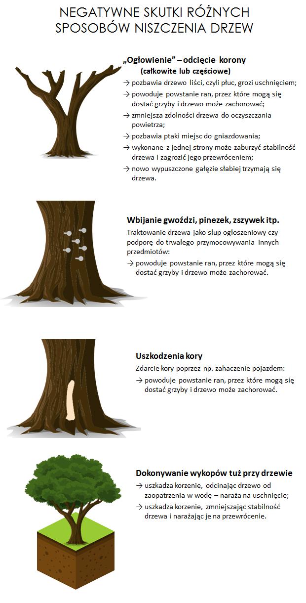 skutki niszczenia drzew