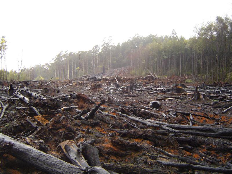 wycięty las